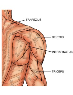 How To Build Stabilizing Muscles