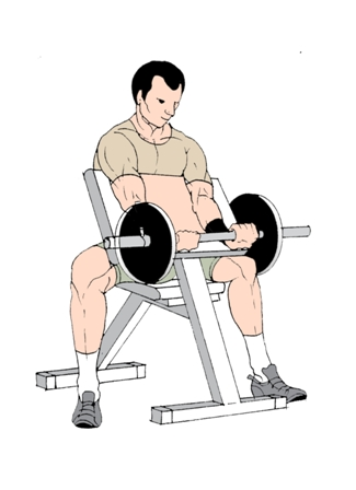 Preacher Curl and Reverse Preacher Curl exercise to for ... | 325 x 448 jpeg 52kB