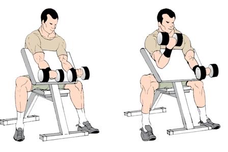 Workout LIke A Pro: Beginner Training  Preacher