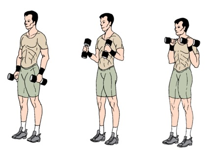 17 Exercises for Arms (Biceps, Triceps, Shoulders) ·