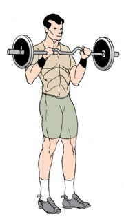 Reverse Barbell Curls to Build biceps and forearm muscles