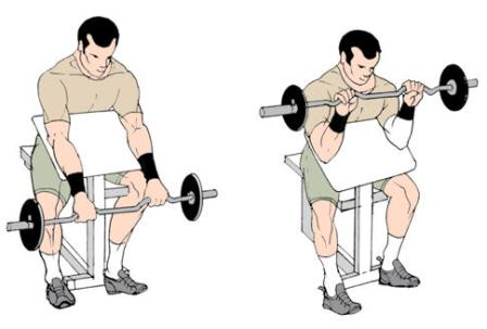 Reverse Preacher Bench Curls to build biceps and forearm ...