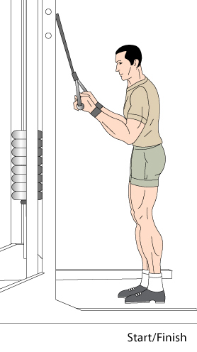tricep pressdowns  full range tricep cable exercise