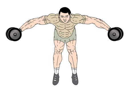 bent over lateral raises  seated  standing  to develop